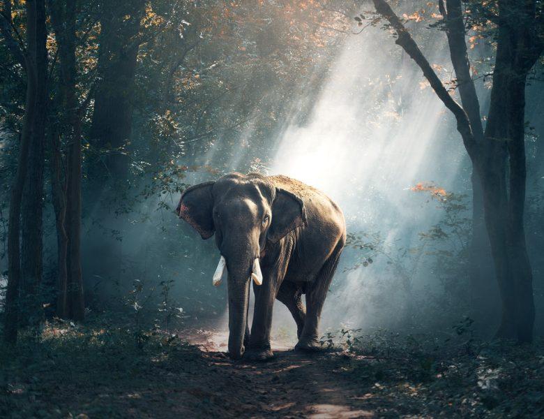 Bali Zoo informatie